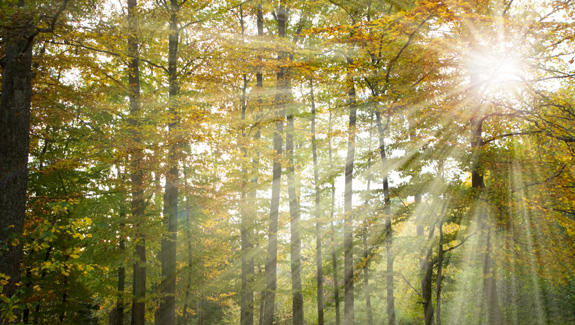 Natural 3D Light Effect | Planet Photoshop