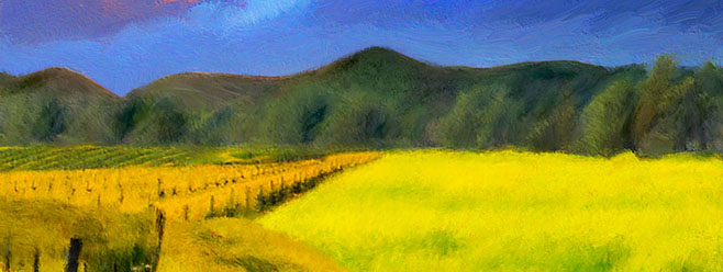 Napa Fields-2