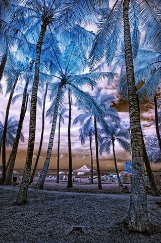 7-infrared-palm-trees.jpg