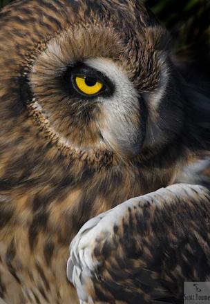 5_owlsm
