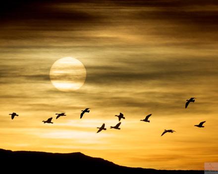 6_sunsetsm