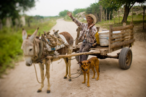 Elderly Mexican man with donkey cart