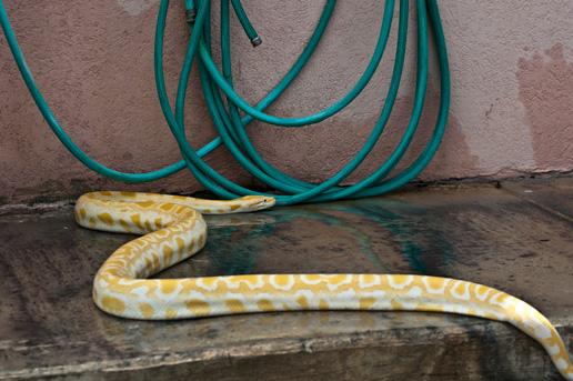 snake2sm