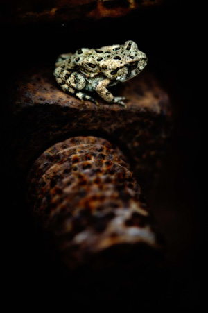 Toad-on-a-bolt-680x1023